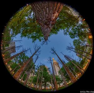 2021 Maya Lin - Ghost Forest