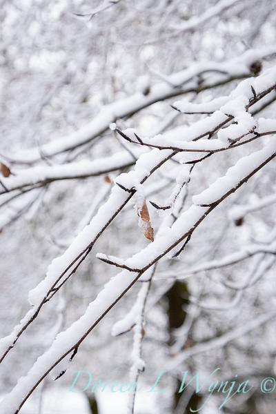 Fagus sylvatica in snow_4221.jpg