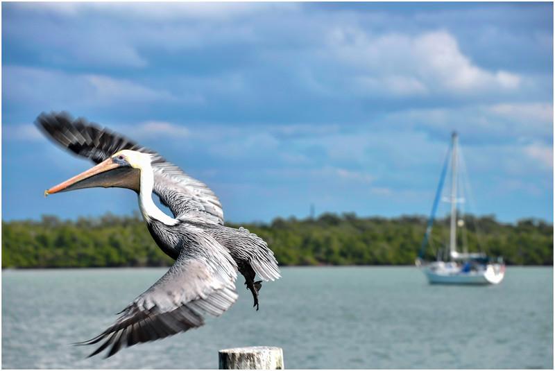 Marco Island Day 1 (18) F.jpg