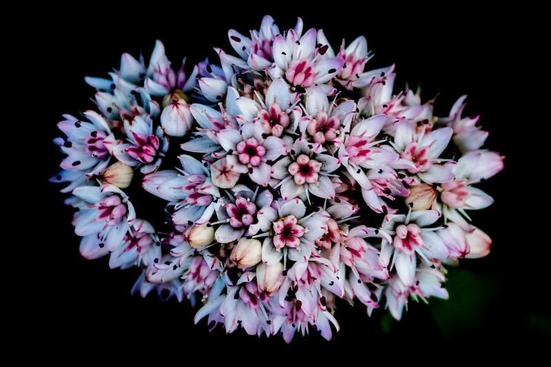 March 1 - Bouquet.jpg