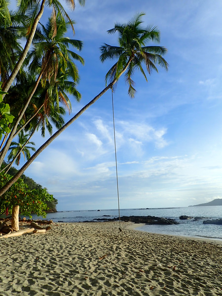 tropical beach with a swing in the palm trees