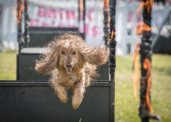 Official Photographer at Dogfest 2018