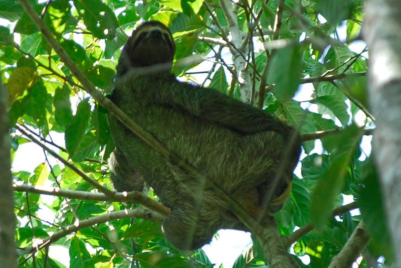 080120 9762 Costa Rica - Manuel Antonio - National Park Wildlife _E _G _L ~E ~L.JPG
