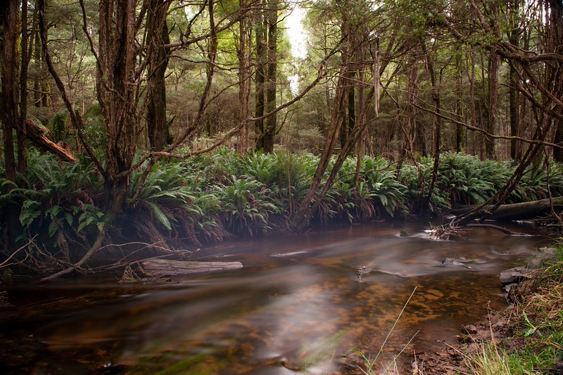 Sylvia Creek