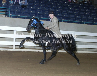 CLASS 37  TWO YR OLD AMATEUR MARES & GELDINGS