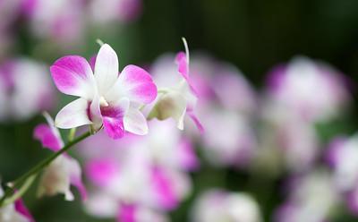 Singapore Botanical/Orchid Gardens