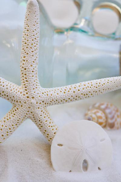 Sea Shells/ Sea Life