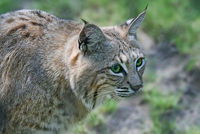 Wildlife/Nature Images