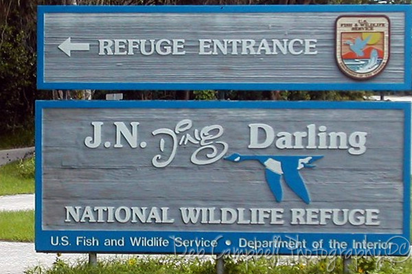Ding Darling and Ft. Myers