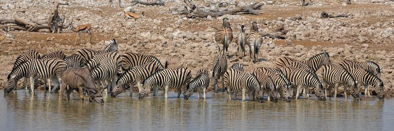 Namibia 69A7984.jpg