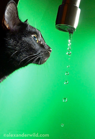 cat_water_highspeed.jpg