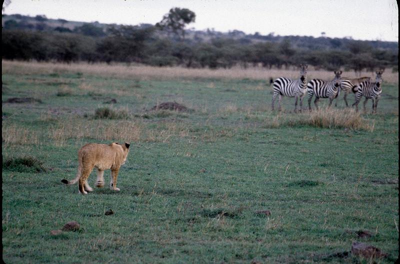 Kenya2_014.jpg