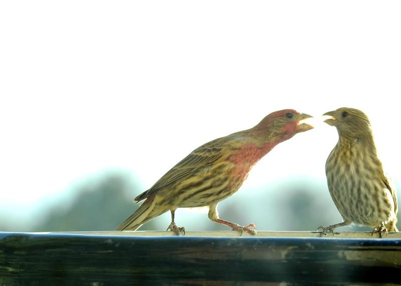 birds (117).JPG