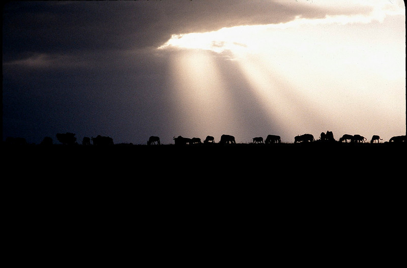 Kenya2_019.jpg