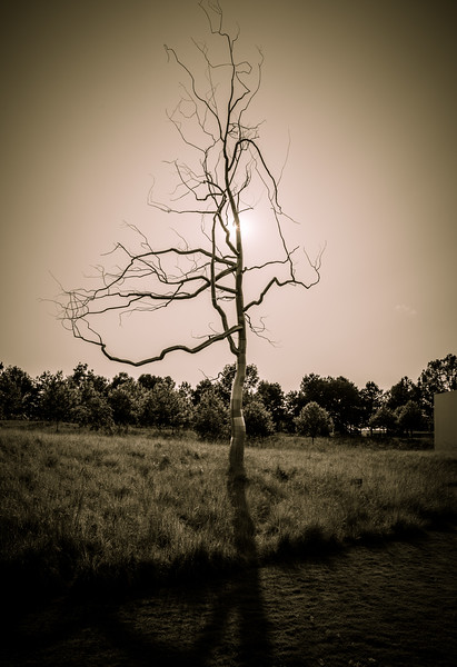 Tree sculpture at NCMA.jpg