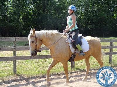 The Woodland Horses!