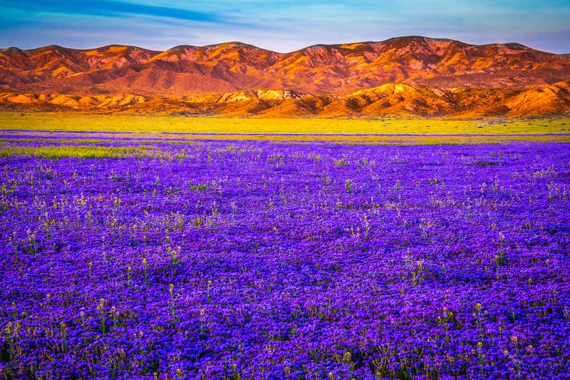 Carrizo Plain National Monument Wildflowers Superbloom Spring Symphony 36!  Elliot McGucken Fine Art Landscape Nature Photography Prints & Luxury Wall Art