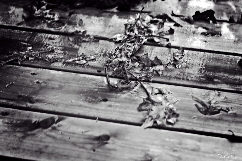 fallen leaves2018#3rain on the deck bw_L_12509 copy.jpg