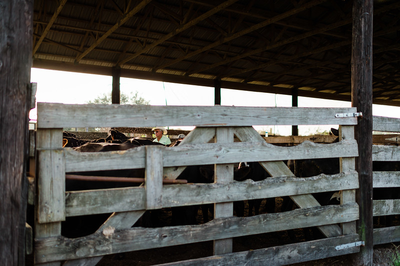 Barthle Cattle-2 (54 of 102).jpg