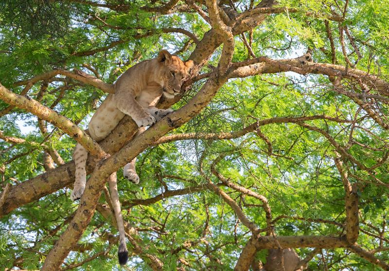 Uganda_T_QE-1619.jpg