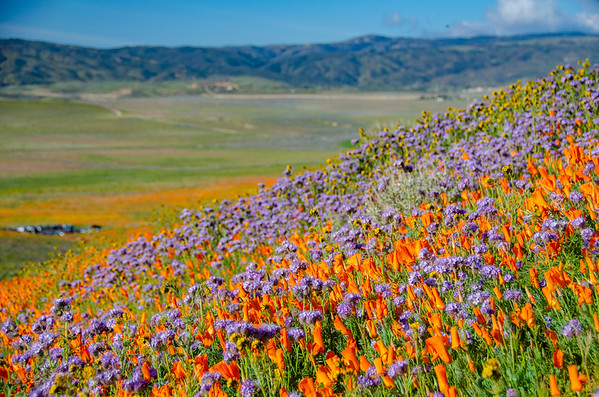 Super Bloom Road Trip 2019