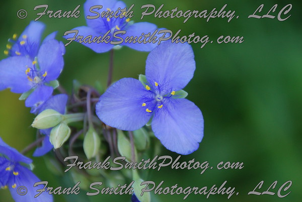 Missouri Wildflowers