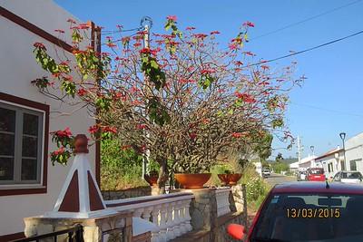 Vale Fuzeiros, Algarve [Vivienne]