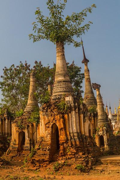 Pagoda Tree