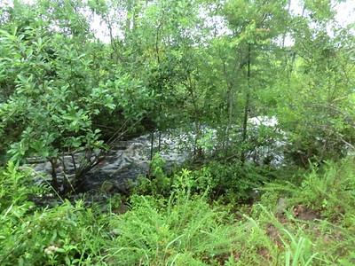 EMPEROR / Swamp / Cedar Pond