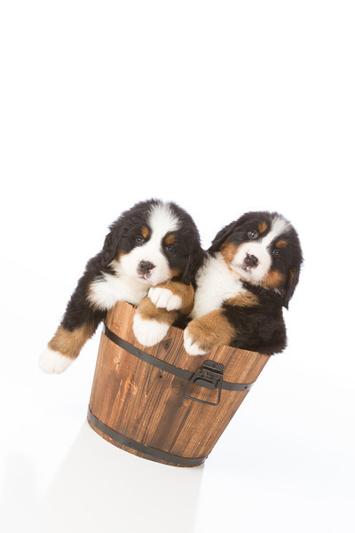 2013-Pearson Pups-Jun02-0434.jpg