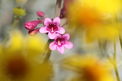 Spring Flowers-29FEB2016