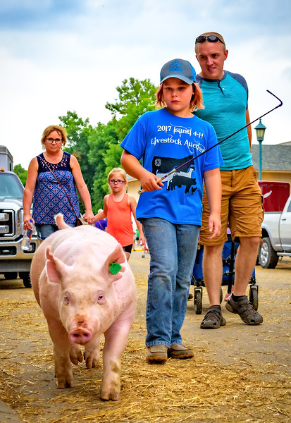 Enjoying the Great Minnesota Get Together this week. I was keen on photographing the young ones with their animals. This boy was leading his pig into the Swine Barn.