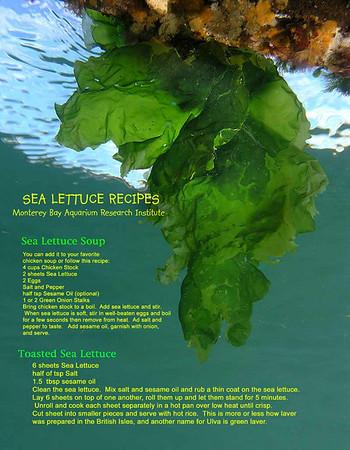 Seaweed, algae, kelp