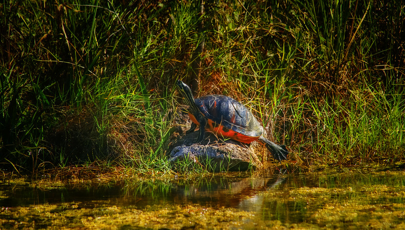 Animals&Creatures-045.jpg
