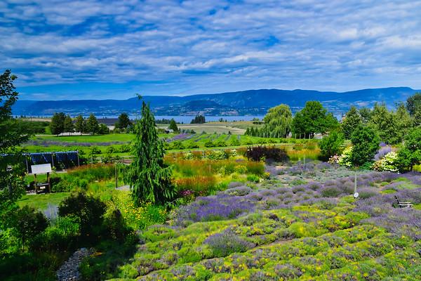 Okanagan Lavender & Herb Farm, Kelowna BC (July 2019)