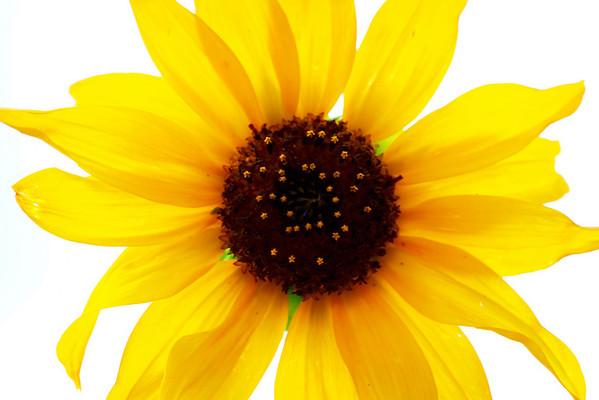 Portfolio - Flowers & Plants