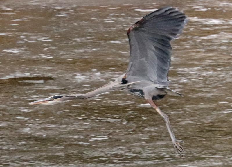Heron 93