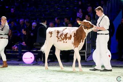 Swiss Expo 2019 RW Holstein Heifers