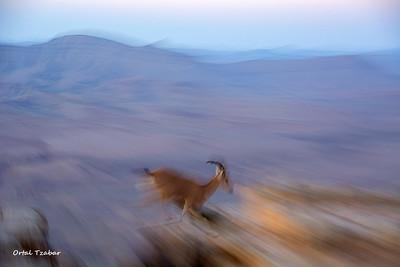 בעלי חיים- צילום אורטל צבר