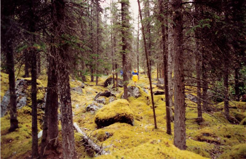 Alaska  0990 BR 96.jpeg