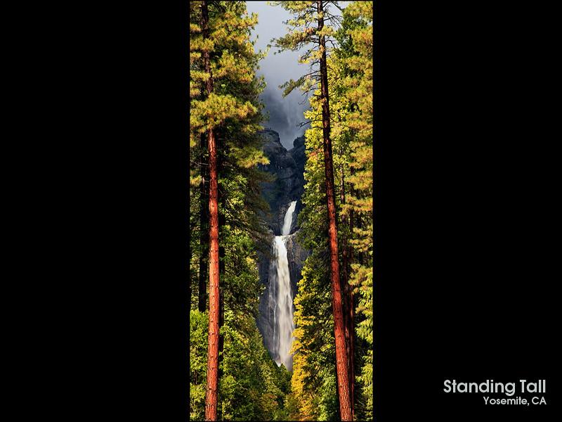 Standing Tall Panoramic.jpg