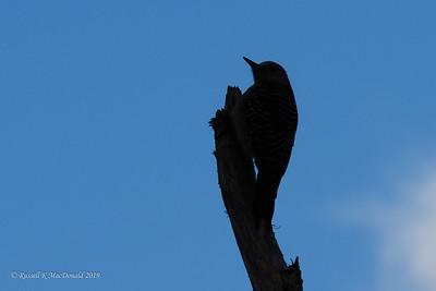 2019-01-28 Birding in Fort Pierce FL