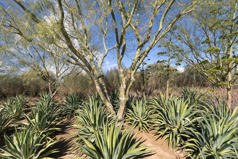 Palm_Springs_2018_035.jpg