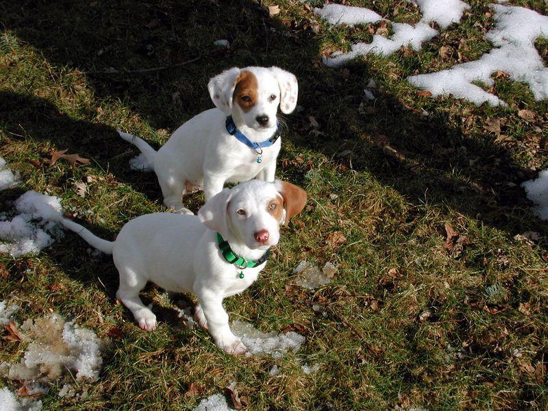Feb 05- Puppies 016_edited.jpg