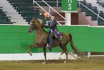 170 - Reg. American Saddlebred Country Pleasure English 17 & under Stake