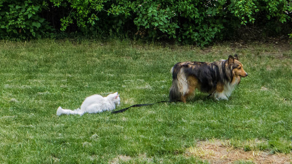 Benji & Kitty