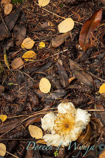 Dietrick fall garden_2102.jpg