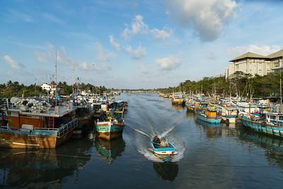 Fish Market Negombo 2016