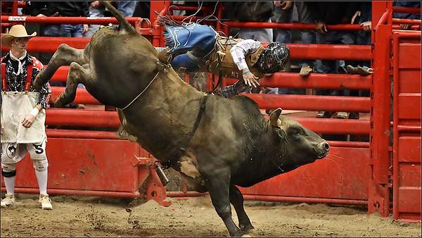 2021 Bull Feb 6