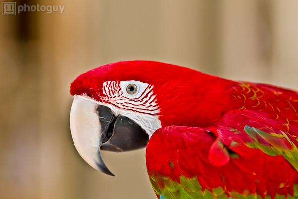 Macaw Bird in Miami Upclose